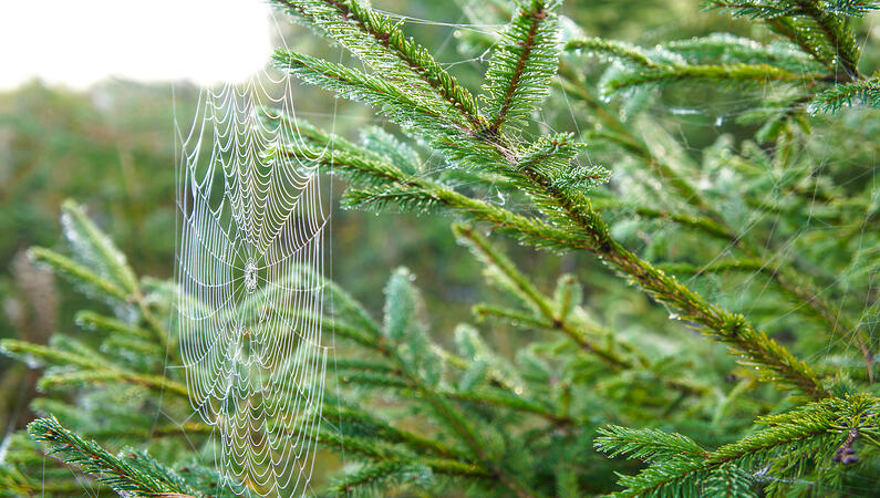 Spider web on a Christmas tree