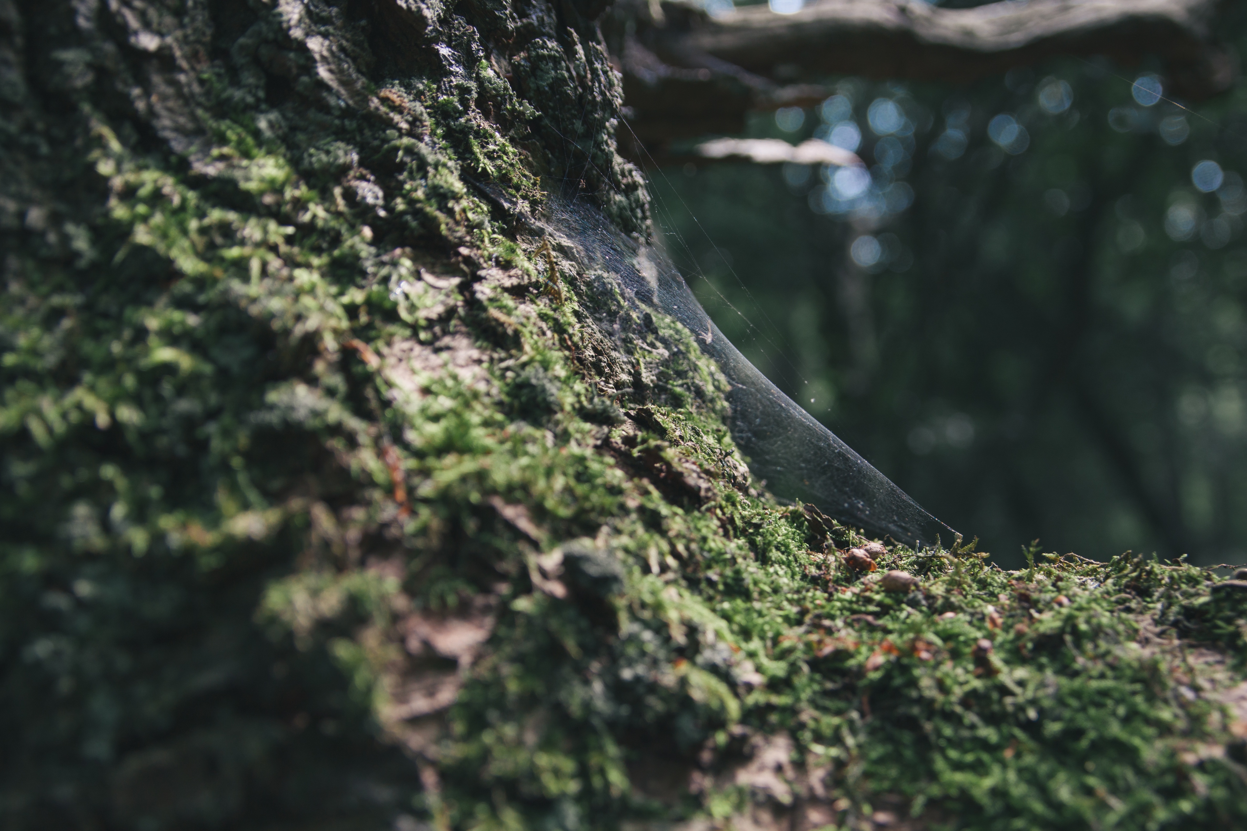 Spider webs on tree branches.