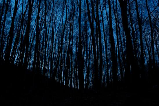 Trees in the woods at night.